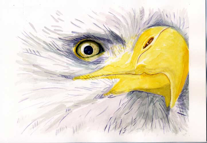 eagle#1