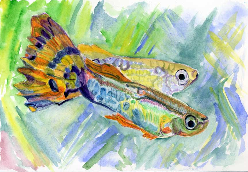 fish#4