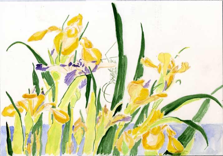 grasshopper and irises