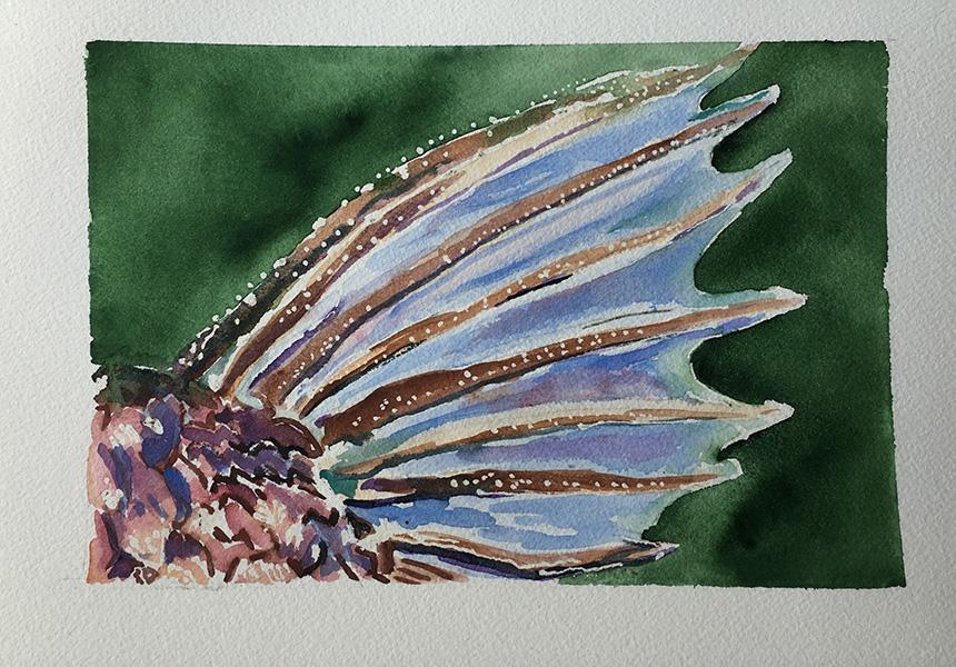 20170724-fish-web